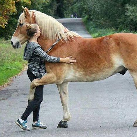 Pferde Tricks