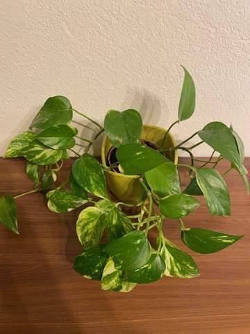 Wie bringe ich diese Pflanzen weiter, damit sie größer werden?