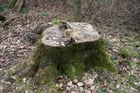 Baumstumpf Beispiel - (Garten, Baumstumpf entfernen, Wurzel entfernen)