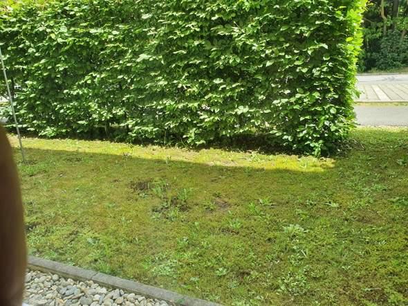 Wie einen kleinen Garten gestalten?