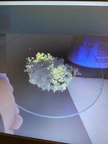 Wie erkläre ich die Lichterscheinung unter UV-Licht mithilfe der Fachsprache?