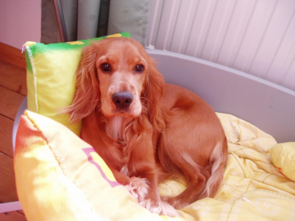 Wie Ernähre Ich Meinen Hund Am Besten? (Nahrung