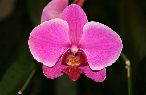 Wie fändet ihr ein großes Orchideen-Tattoo im Intimbereich bei Damen, das die natürlichen organischen Gegebenheiten in das Gesamtbild mit einbezieht?