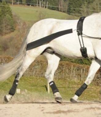 Wie fest soll das Elastische Körperband am Pferd anliegen?