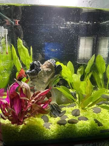 Wie findet ihr das Aquarium?