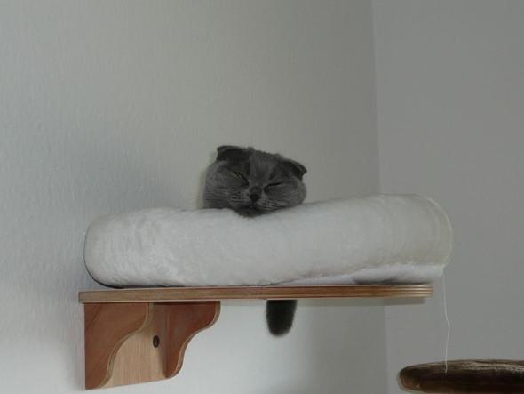 wie findet ihr diese wandliegebretter f r katzen katze holz lackieren. Black Bedroom Furniture Sets. Home Design Ideas