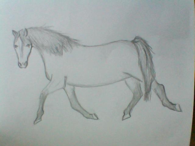 wie findet ihr diese zeichnung und erkennt man die rasse bilder pferde reiten. Black Bedroom Furniture Sets. Home Design Ideas
