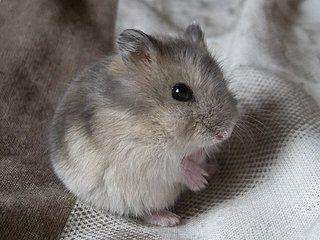 How do you find this hamster and how would you call him?
