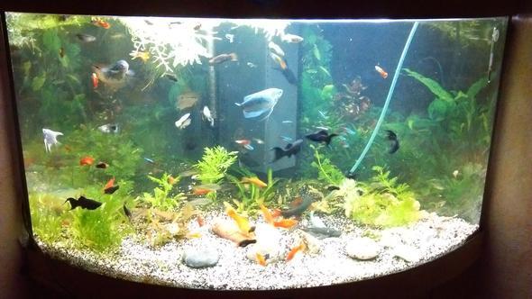 AQ - (Pflanzen, Fische, Aquarium)