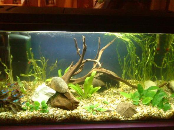 becken neu - (Tiere, Fische, Aquarium)