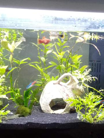 How do you find my aquarium?