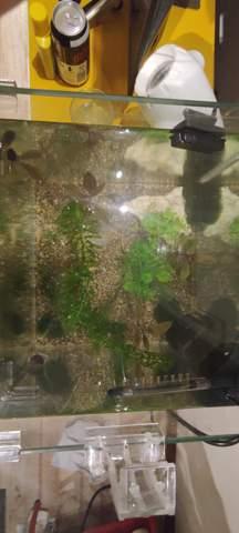 Wie findet ihr mein Aquarium?