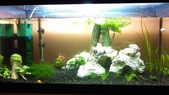wie findet ihr mein neues aquarium tipps und ideen deko. Black Bedroom Furniture Sets. Home Design Ideas