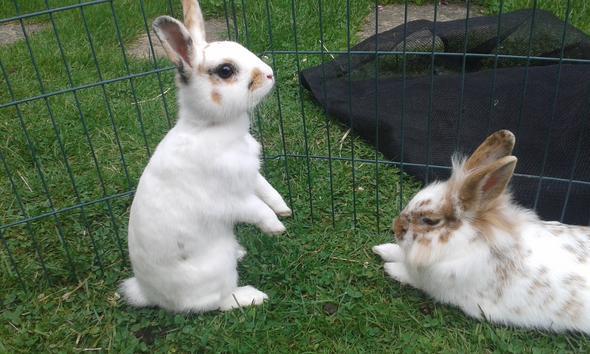 wie findet ihr meine kaninchen haltung auf einer skala von