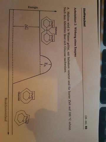Wie funktioniert die Maltosenspaltung ? (Schule, Chemie, Biologie)