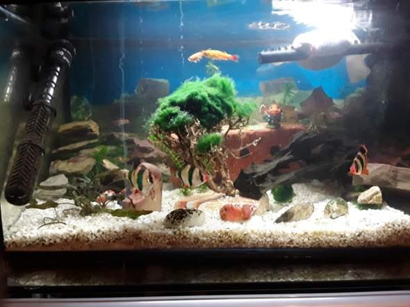 Wie gefällt euch dieses Aquarium?