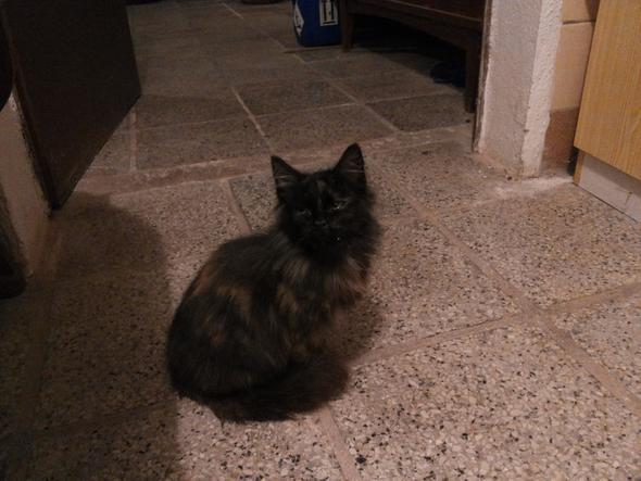 Unser Neuling Fussel - (Tiere, Katze, Katzen)