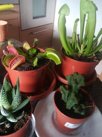 Wie gieße ich meine neuen Pflanzen?