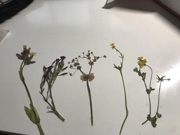 WIE heißen die 5 Blumen?