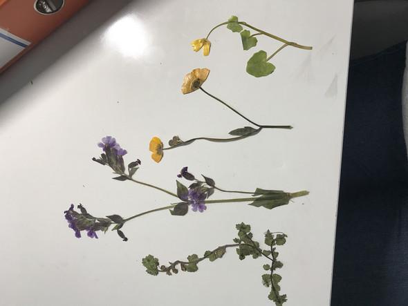 WIE heißen die vier Blumen?