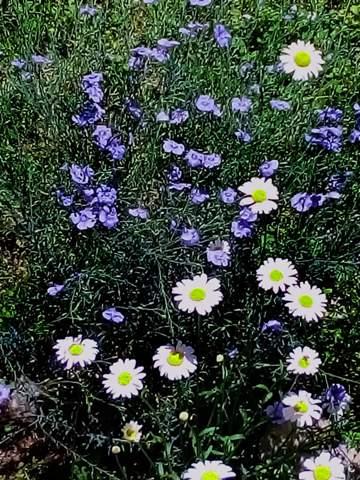 Wie heißen diese Blumen?