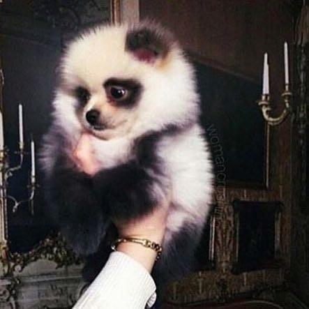 Das ist dieser süße Hund. - (Hund, Name, Panda)
