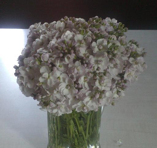 Blumen auf unserer Wiese - (Garten, Blumen, wiese)