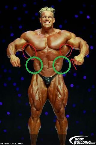 Muskeln - (Muskeln, Muskelaufbau)