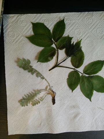 zwei Pflanzen die ich absolut nicht einordnen kann - (Schule, Biologie, Garten)