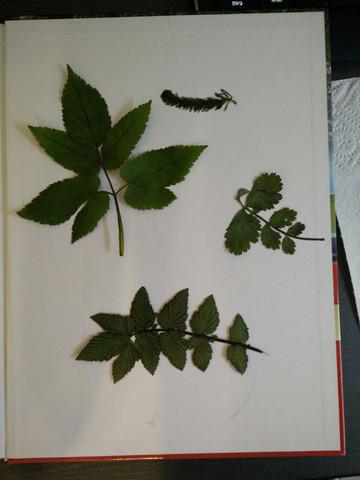 Die kleine Pflanze oben ist ein Moos, die links ist nicht verholzt - (Schule, Biologie, Garten)