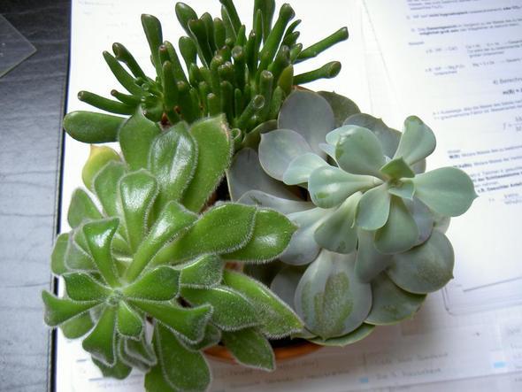wie heißen diese sukkulenten? (Garten, Pflege, Pflanzen) ~ 14014347_Sukkulenten Ableger Pflanzen