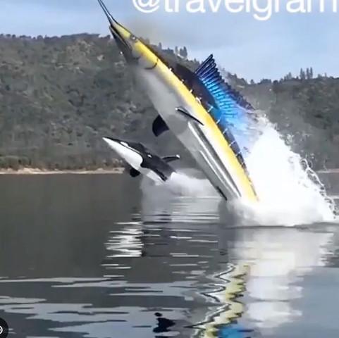 Hshdc - (Wasser, Boot, jetski)