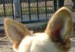 stehende, runde Hundeohren - (Tiere, Hund, Name)