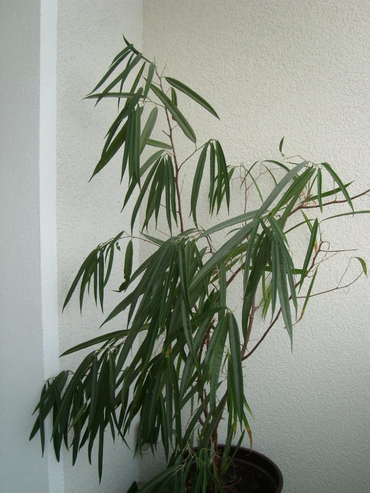 wie hei t diese pflanze strauch bitte auch pflegetipps garten pflanzen pflanzenpflege. Black Bedroom Furniture Sets. Home Design Ideas