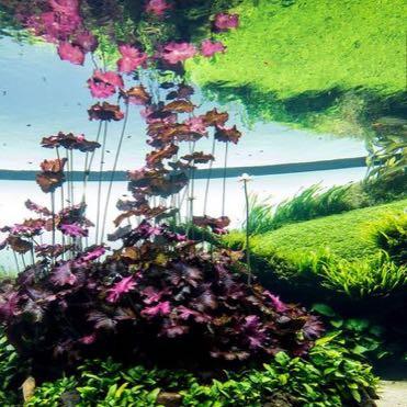 :))))))) - (Wasser, Aquarium, Terrarium)