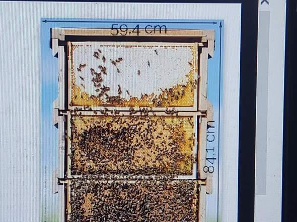 Wie heißt das Abteil wo Bienen den Honig produzieren?