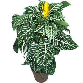 - (Pflanzen, Bestimmung)