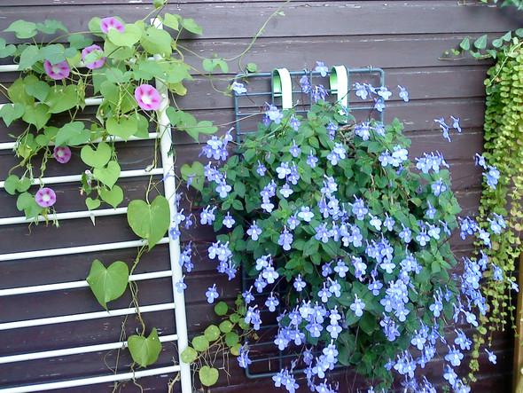 blühpflanze - (Pflanzen, suche )