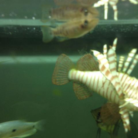 Ich meine den Fisch an der Oberfläche,der sich spiegelt!! - (Tiere, Fische, Tierhaltung)