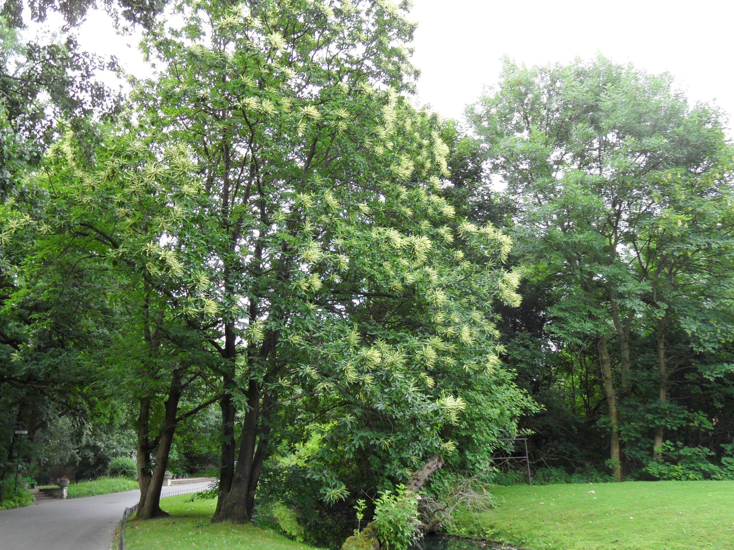 Wie hei t der baum im tierpark berlin pflanzen for Berlin pflanzen