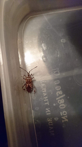 Käfer - (Tiere, Natur, Insekten)