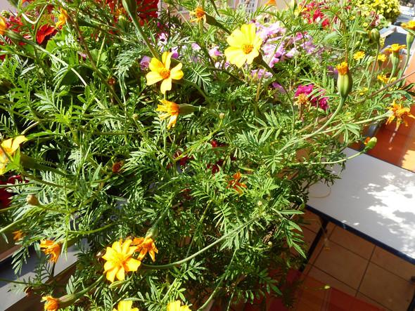 Blume gesamt - (Pflanzen, Blumen, Botanik)