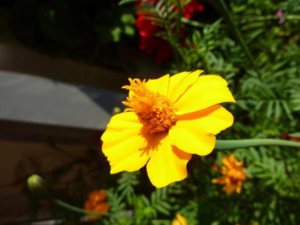 Blüte - (Pflanzen, Blumen, Botanik)