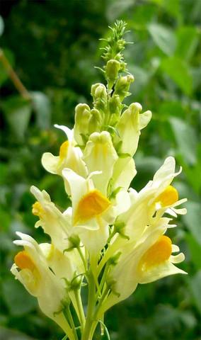 Blumenname gesucht! - (Name, Blumen)