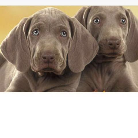 Das sind die Hunde  - (Hund, Rasse, Hunderassen)