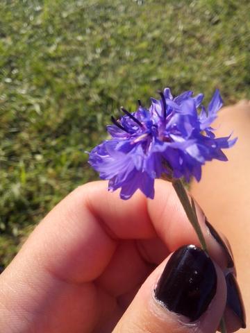 Wie heißt die lila blume auf deutsch?! :D ich kenn nur den russichen ...