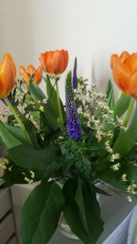 Lila blume - (Pflanzen, Blumen, lila)