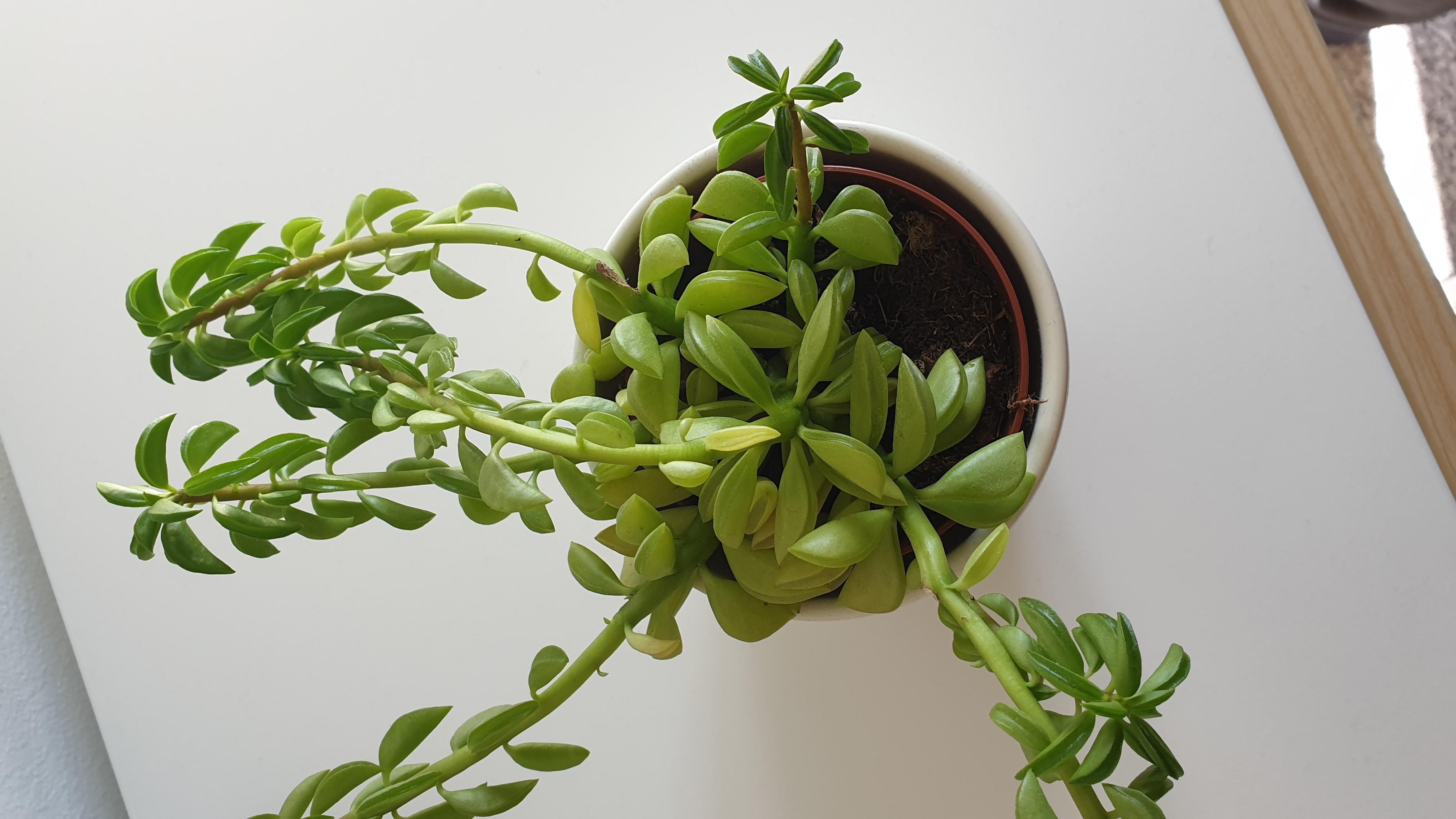 Wie Heißt Die Pflanze & Kann Ich Die Langen Stängel
