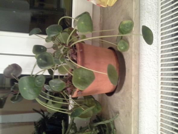 Pflanze 2012 - (Pflanzen, Pflanzenpflege)