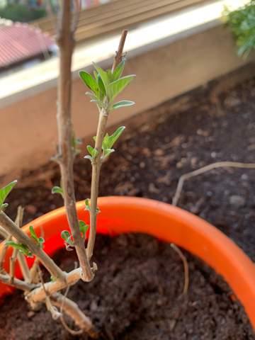 Wie heißt die Pflanze?